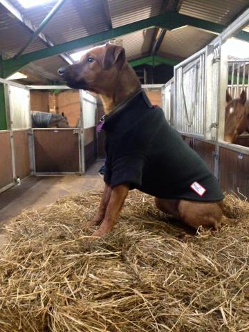Dog Jumper Fleece Turquoise Uk